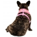 Big and Little Dogs Reversible Harness Gettin Piggy with it
