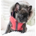 Puppia Orson Jacket Harness