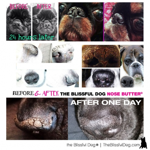 The Blissful Dog Nose Butter Slide Tin